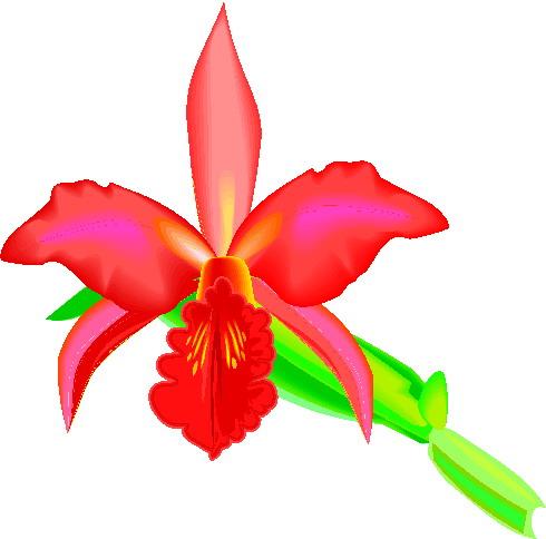 orchidee-bewegende-animatie-0001