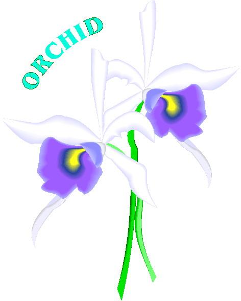 orchidee-bewegende-animatie-0002