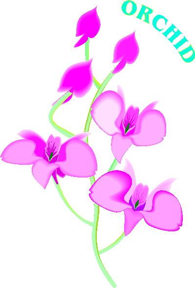 orchidee-bewegende-animatie-0004