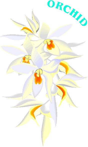 orchidee-bewegende-animatie-0005