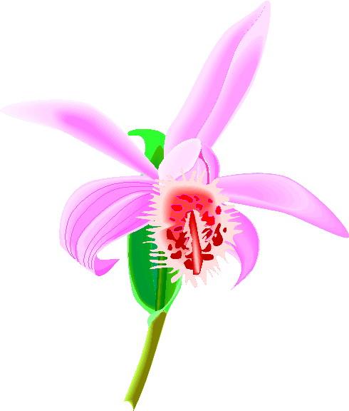 orchidee-bewegende-animatie-0008