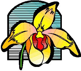 orchidee-bewegende-animatie-0010