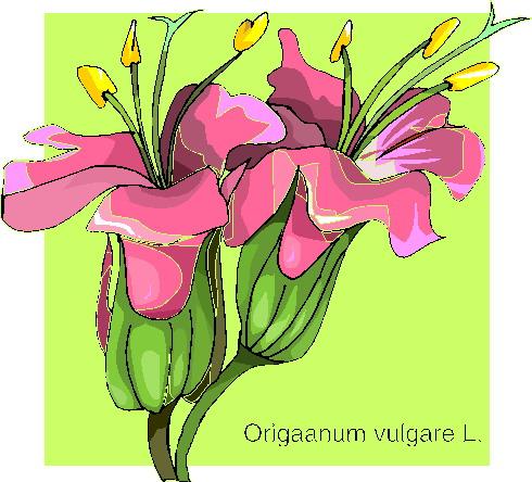 orchidee-bewegende-animatie-0012