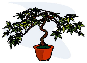 bonsai-boom-bewegende-animatie-0017