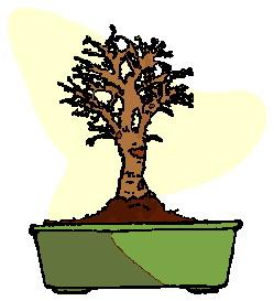 bonsai-boom-bewegende-animatie-0018