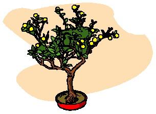 bonsai-boom-bewegende-animatie-0020