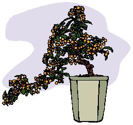 bonsai-boom-bewegende-animatie-0021
