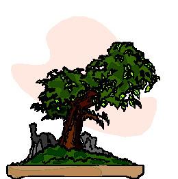bonsai-boom-bewegende-animatie-0022