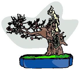 bonsai-boom-bewegende-animatie-0023