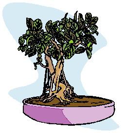 bonsai-boom-bewegende-animatie-0025