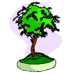 bonsai-boom-bewegende-animatie-0027