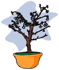 bonsai-boom-bewegende-animatie-0030