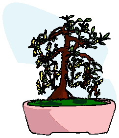 bonsai-boom-bewegende-animatie-0031