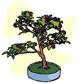 bonsai-boom-bewegende-animatie-0032
