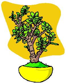 bloemen en planten animatie
