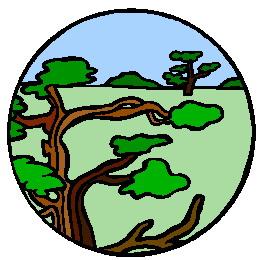 bonsai-boom-bewegende-animatie-0038