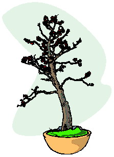 bonsai-boom-bewegende-animatie-0042