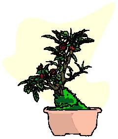 bonsai-boom-bewegende-animatie-0043