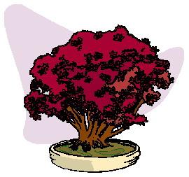 bonsai-boom-bewegende-animatie-0044