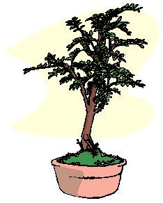 bonsai-boom-bewegende-animatie-0045