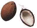 kokosnoot-bewegende-animatie-0002