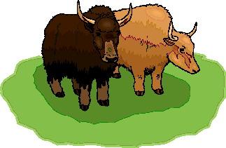 buffel-bewegende-animatie-0001