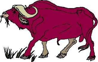 buffel-bewegende-animatie-0002