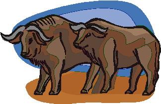 buffel-bewegende-animatie-0014