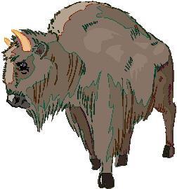 buffel-bewegende-animatie-0021