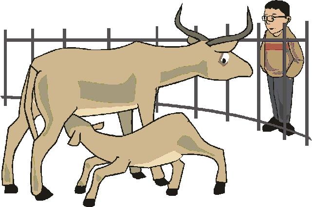 dierentuin-en-zoo-bewegende-animatie-0183
