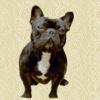 franse-bulldog-bewegende-animatie-0003