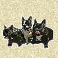 franse-bulldog-bewegende-animatie-0004