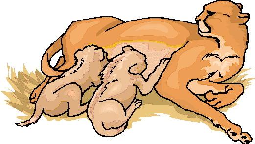 leeuw-bewegende-animatie-0089