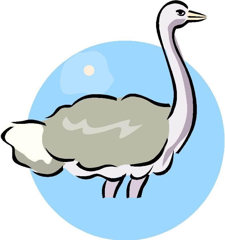 struisvogel-bewegende-animatie-0055