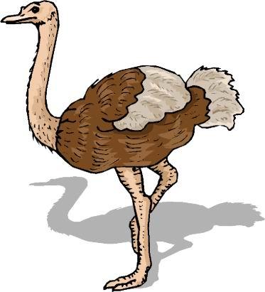 struisvogel-bewegende-animatie-0058