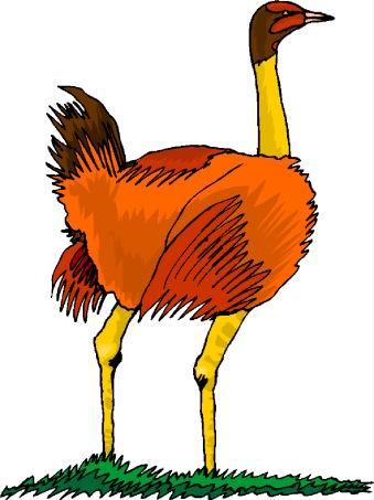 struisvogel-bewegende-animatie-0060
