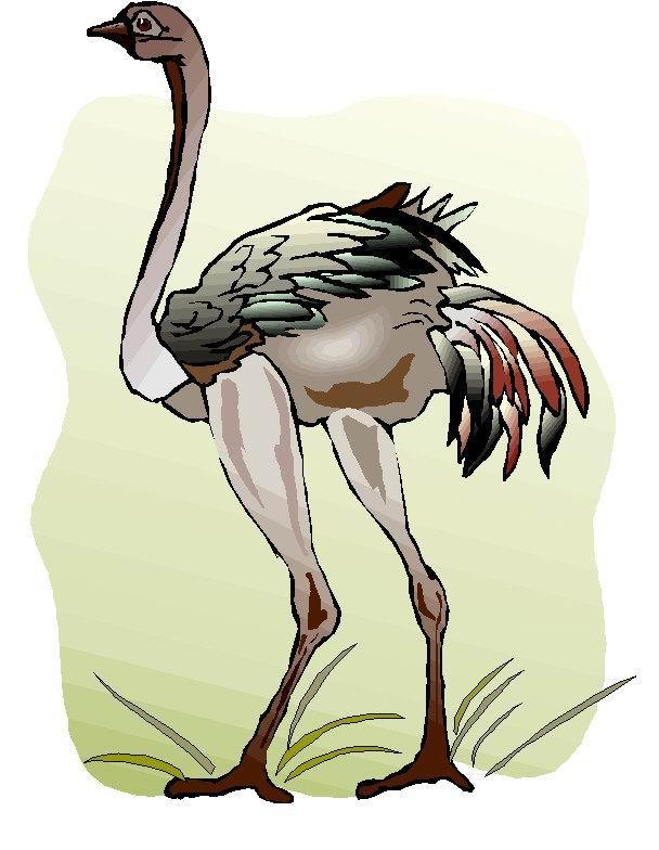 struisvogel-bewegende-animatie-0063