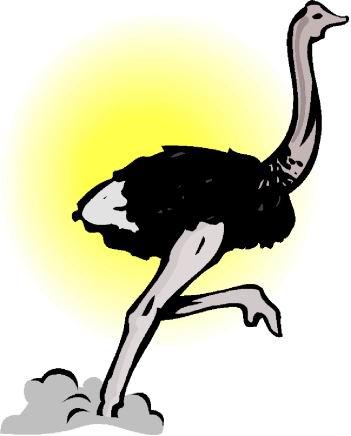 struisvogel-bewegende-animatie-0066