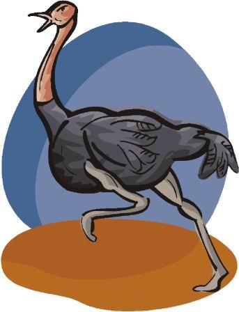 struisvogel-bewegende-animatie-0075