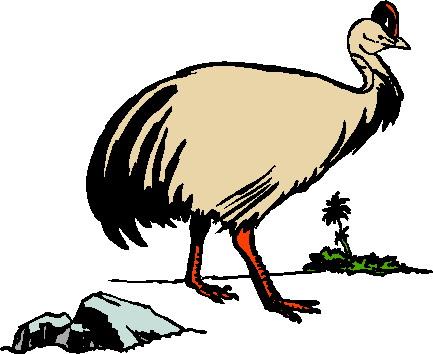 struisvogel-bewegende-animatie-0083