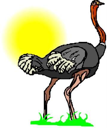 struisvogel-bewegende-animatie-0086