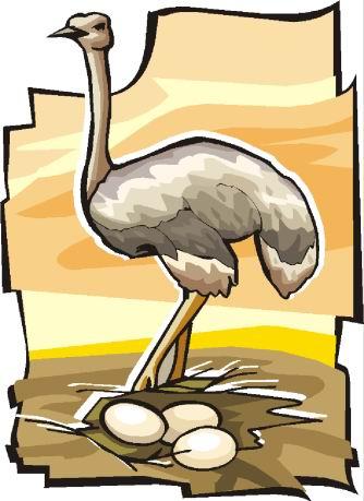 struisvogel-bewegende-animatie-0090