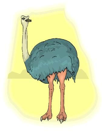 struisvogel-bewegende-animatie-0091