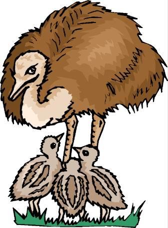 struisvogel-bewegende-animatie-0092