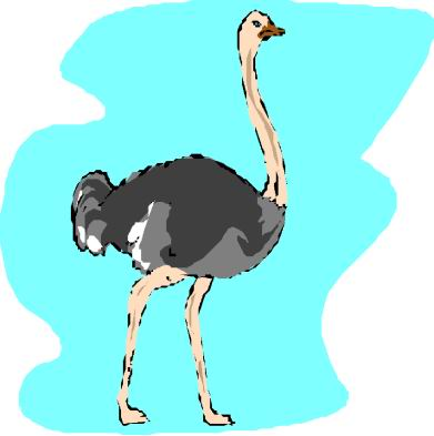 struisvogel-bewegende-animatie-0094
