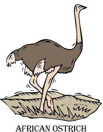 struisvogel-bewegende-animatie-0100