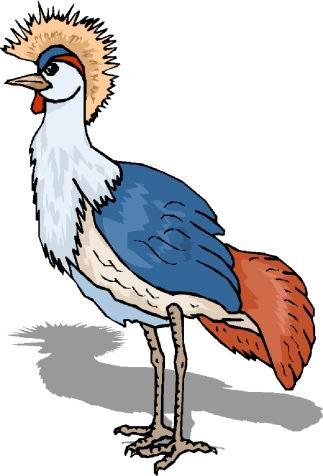 struisvogel-bewegende-animatie-0105