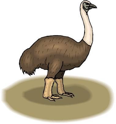 struisvogel-bewegende-animatie-0106