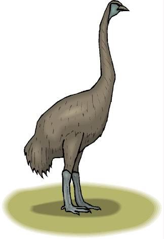 struisvogel-bewegende-animatie-0108