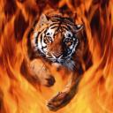 tijger-bewegende-animatie-0043